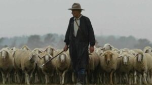 pastoral-min